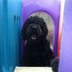 Rudi the dog inside playground