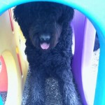 Black dog in tunnel
