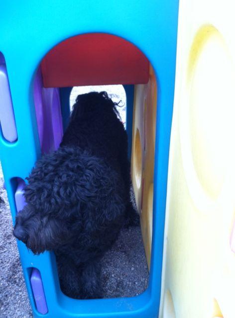 Black dog walking through playground tunnel