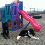 Two dogs sitting outside of playground equipment